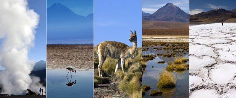 Deserto di Atacama - Cile - Sudamerica fotografia stock libera da diritti