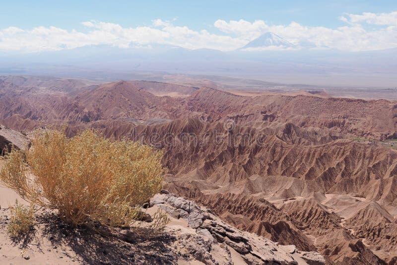 Deserto di Atacama vicino a San Pedro de Atacama fotografia stock libera da diritti