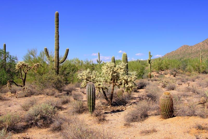 Deserto do Arizona fotografia de stock