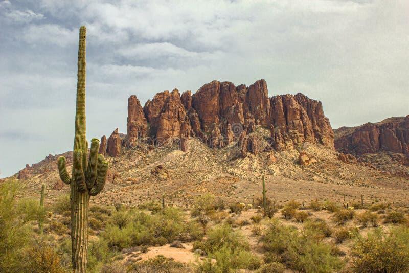 Deserto do Arizona, cacto e formações de rocha foto de stock