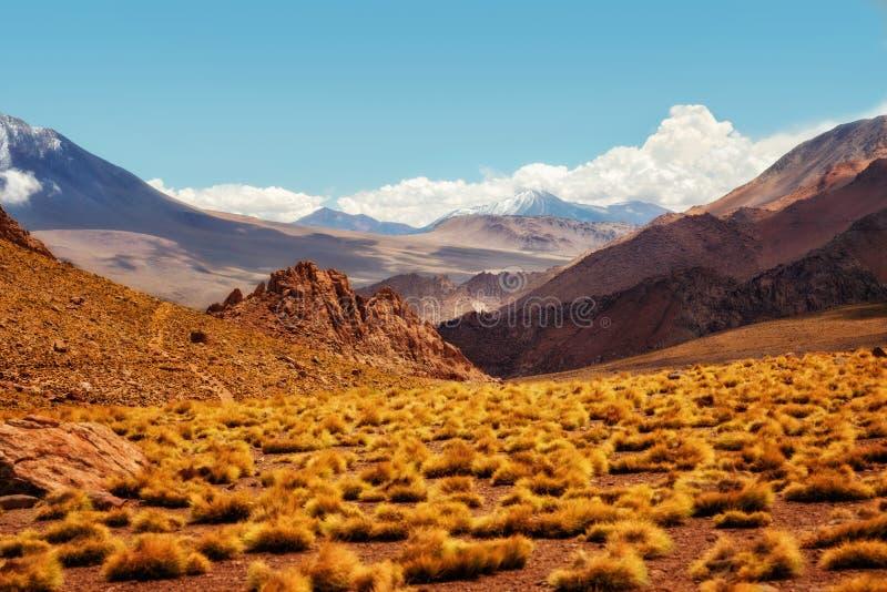 Deserto do Chile Atacama imagem de stock