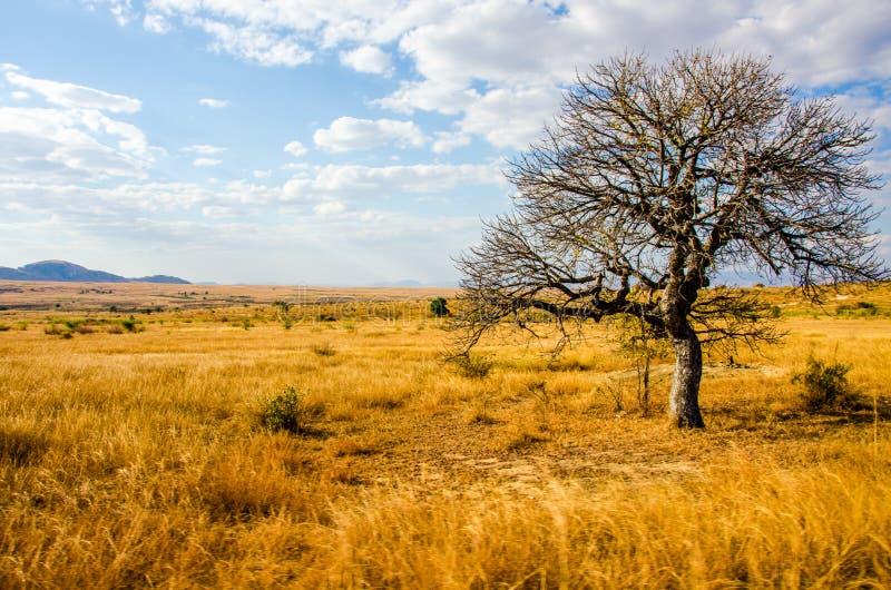 Deserto do savana da paisagem de Madagáscar imagens de stock