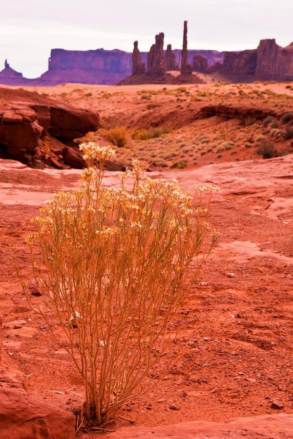 Deserto do vale do monumento imagem de stock