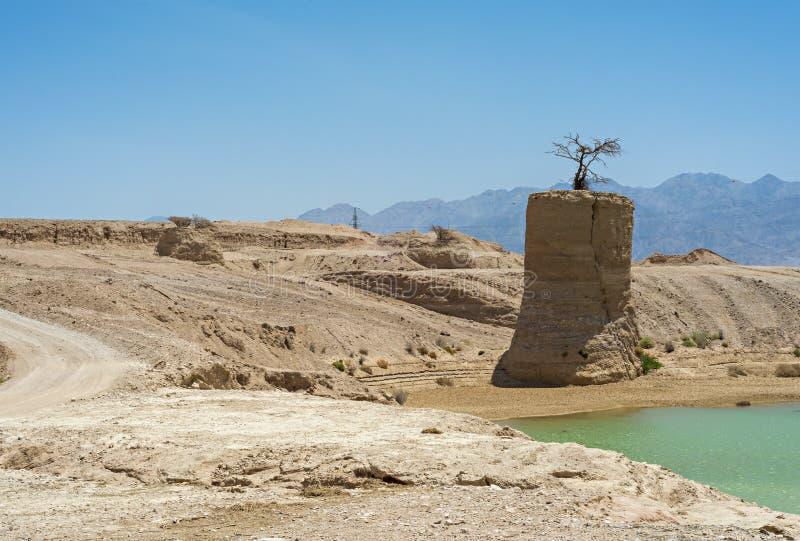 Deserto dopo pioggia, Eilat, Israele fotografie stock libere da diritti