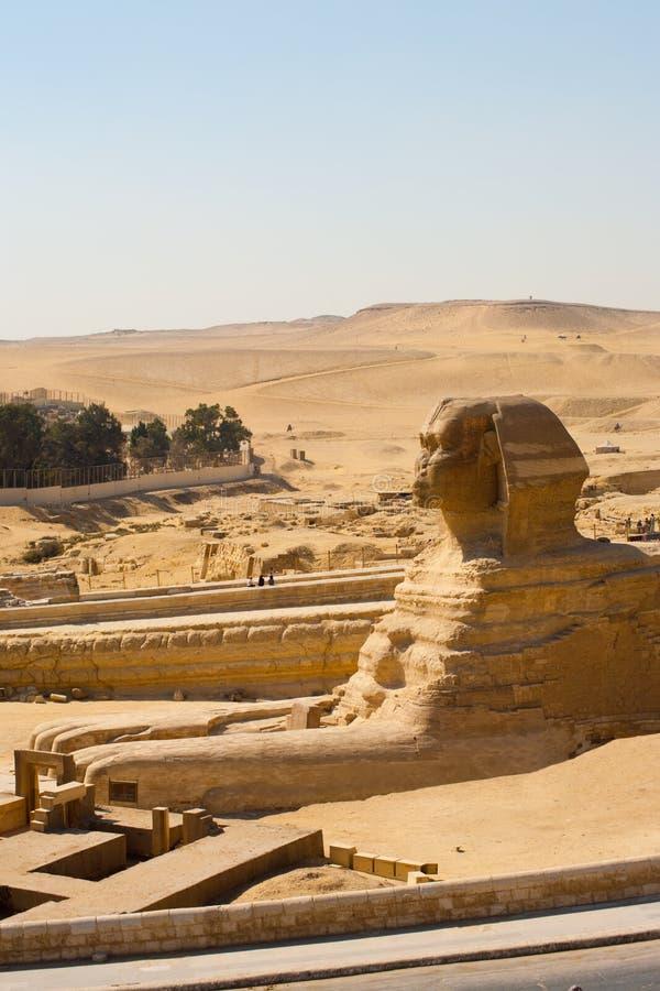 Deserto dos pés do Sphinx do perfil grande fotografia de stock