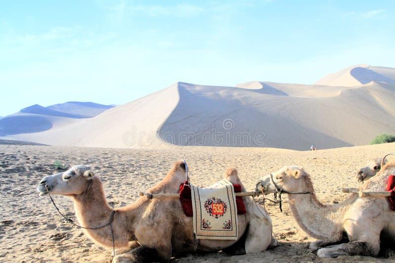 Deserto e cammello immagini stock libere da diritti