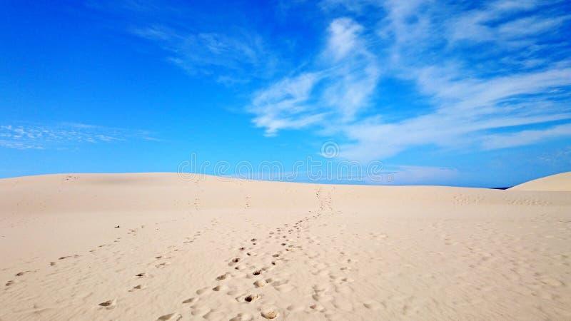 Deserto e ninho dos falcões das pegadas @ fotografia de stock royalty free