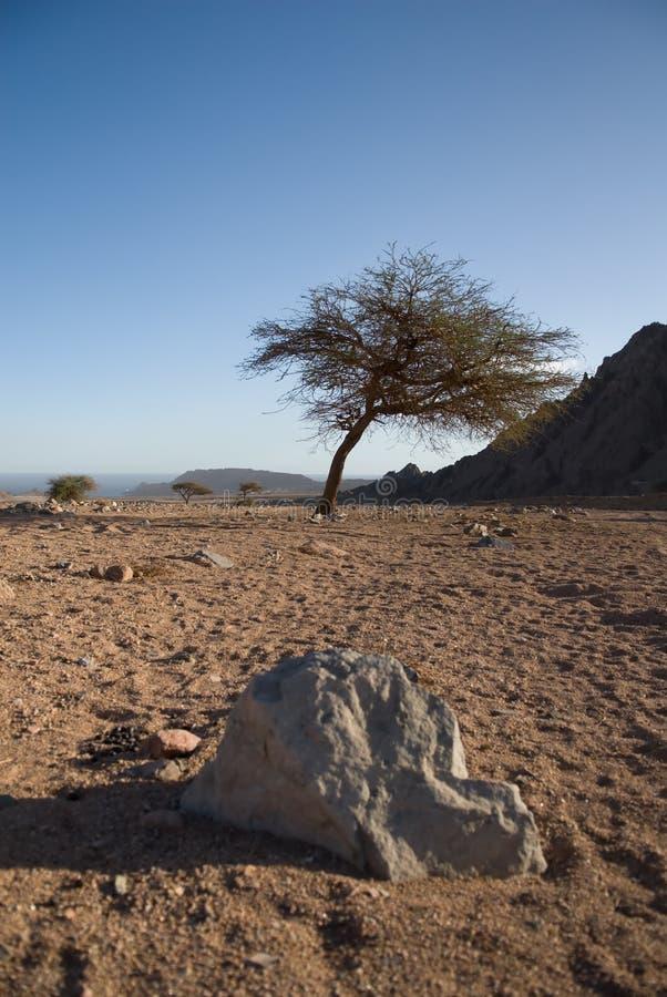 Deserto ed albero asciutti fotografia stock