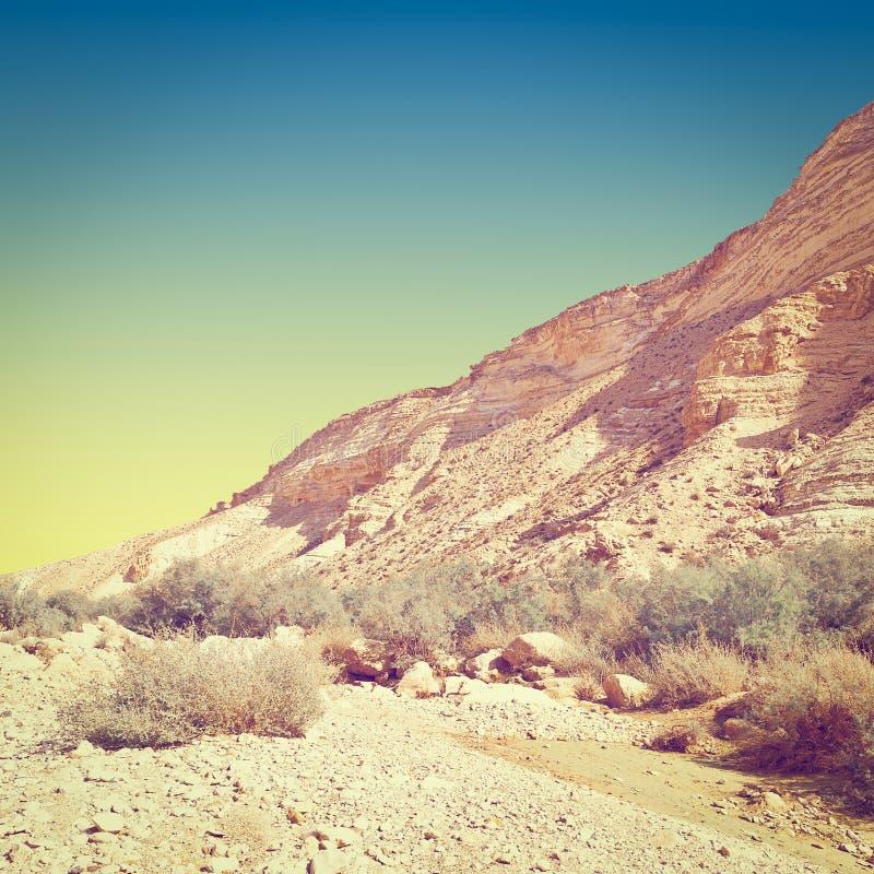 Deserto em Israel fotografia de stock royalty free