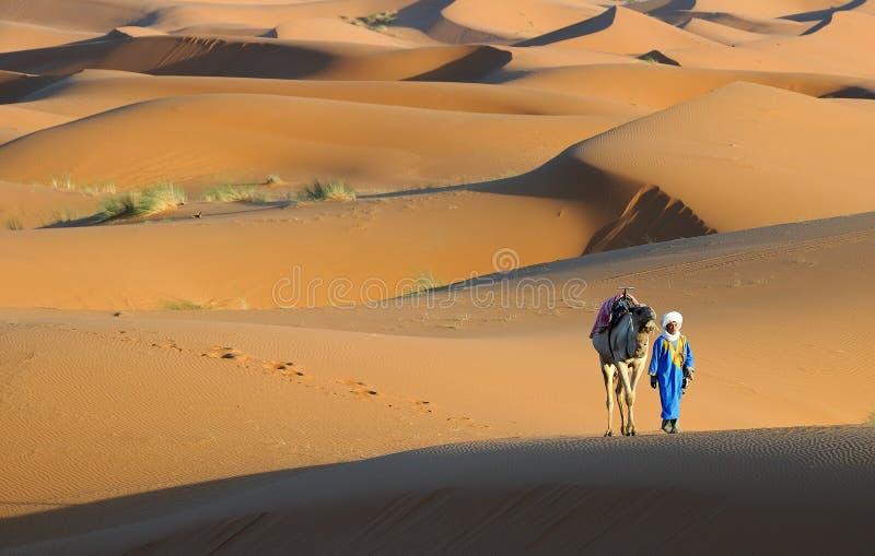 Deserto marocchino 11 fotografie stock