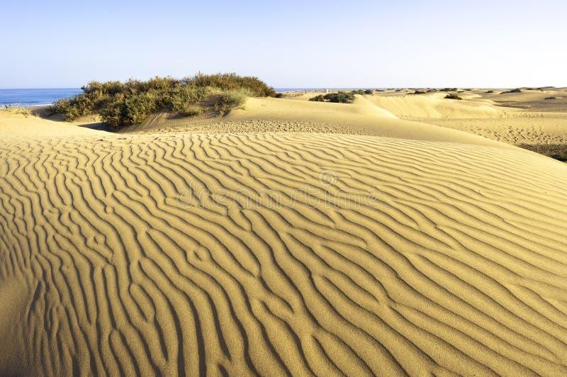 Deserto Maspalomas Gran Canaria immagine stock