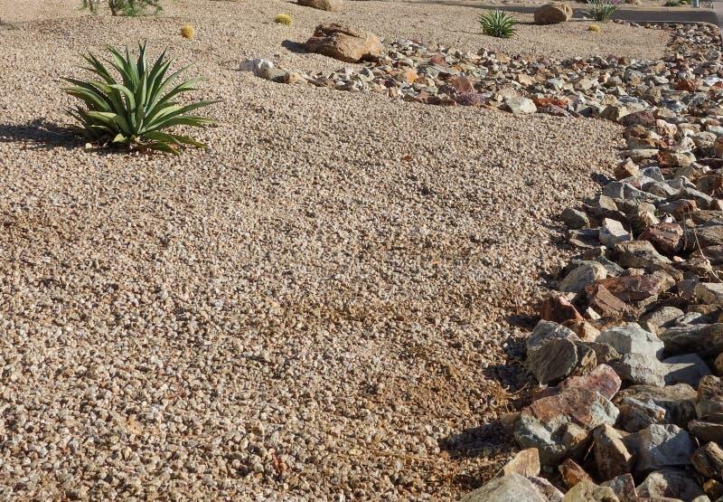 Deserto n d'abbellimento Phoenix, AZ fotografia stock