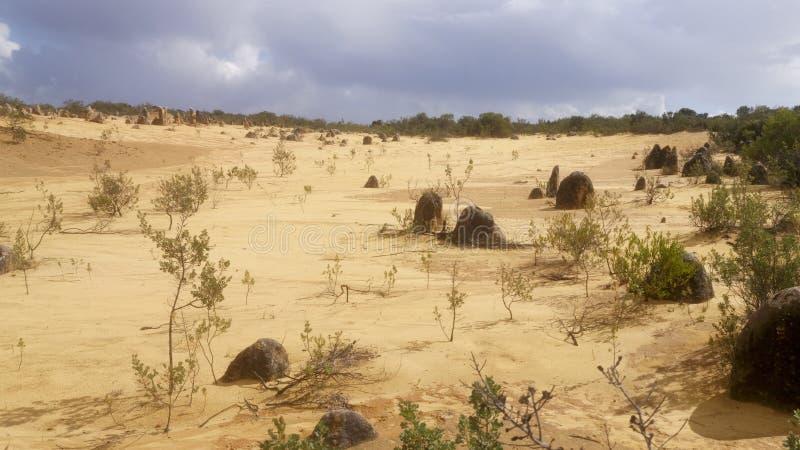 Deserto nos pináculos, WA imagens de stock royalty free