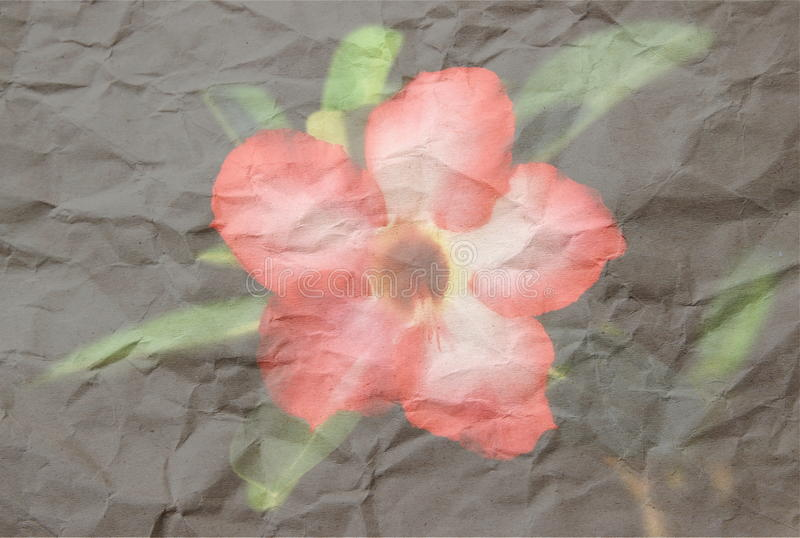 Deserto Rosa imagens de stock