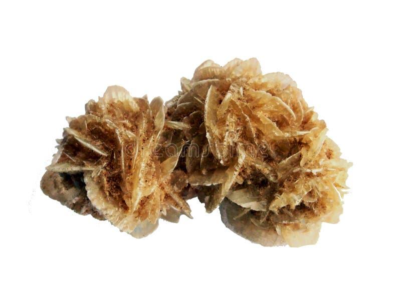 Deserto Rose Selenite Gemstone Stratificato, bianco e marrone fotografie stock libere da diritti