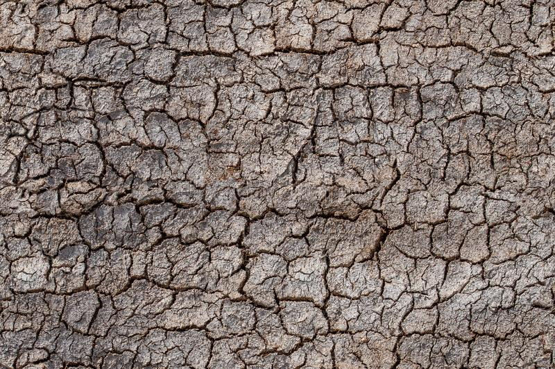 Deserto, solo rachado, teste padr?o sem emenda do problema da eros?o do ambiente imagem de stock royalty free