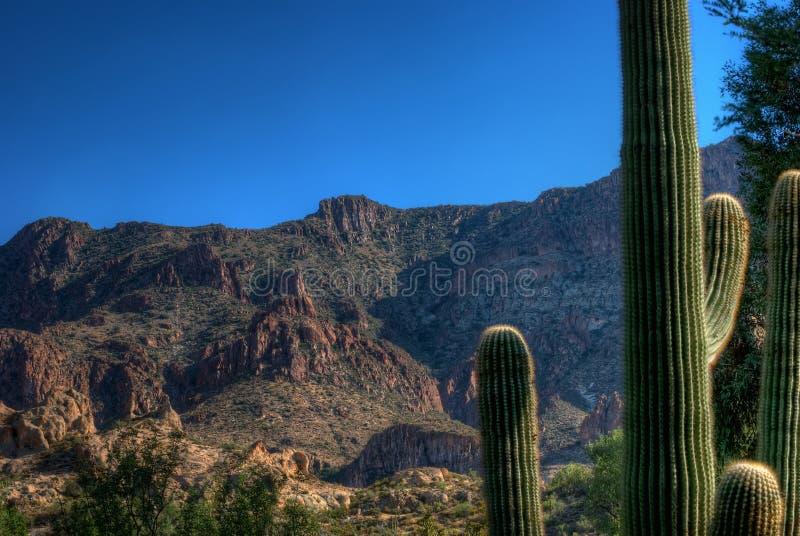 Deserto vicino al superiore fotografia stock libera da diritti