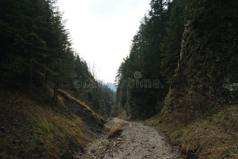 Desfiladeiro escuro da montanha imagem de stock