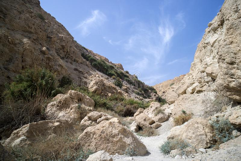 Desfiladeiro nas montanhas Uns oásis no deserto de Judean Paisagem bonita da montanha Natureza do parque nacional de Médio Orient fotos de stock