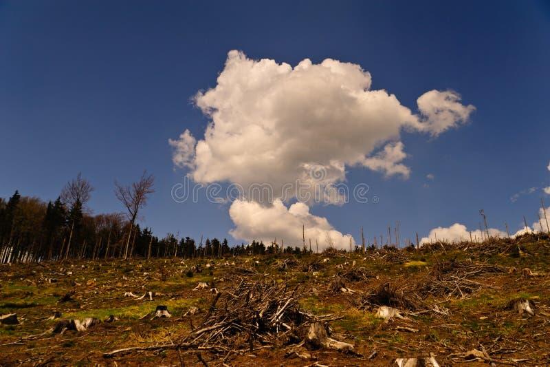Desflorestamento foto de stock