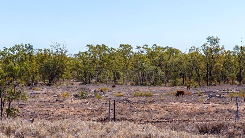 Desflorestamento da terra para o gado que pasta fotografia de stock royalty free