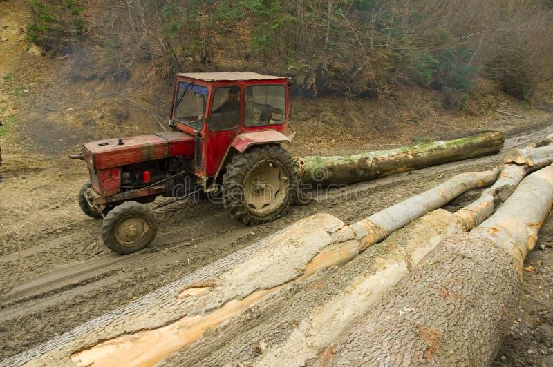 Desflorestamento ilegal fotos de stock royalty free