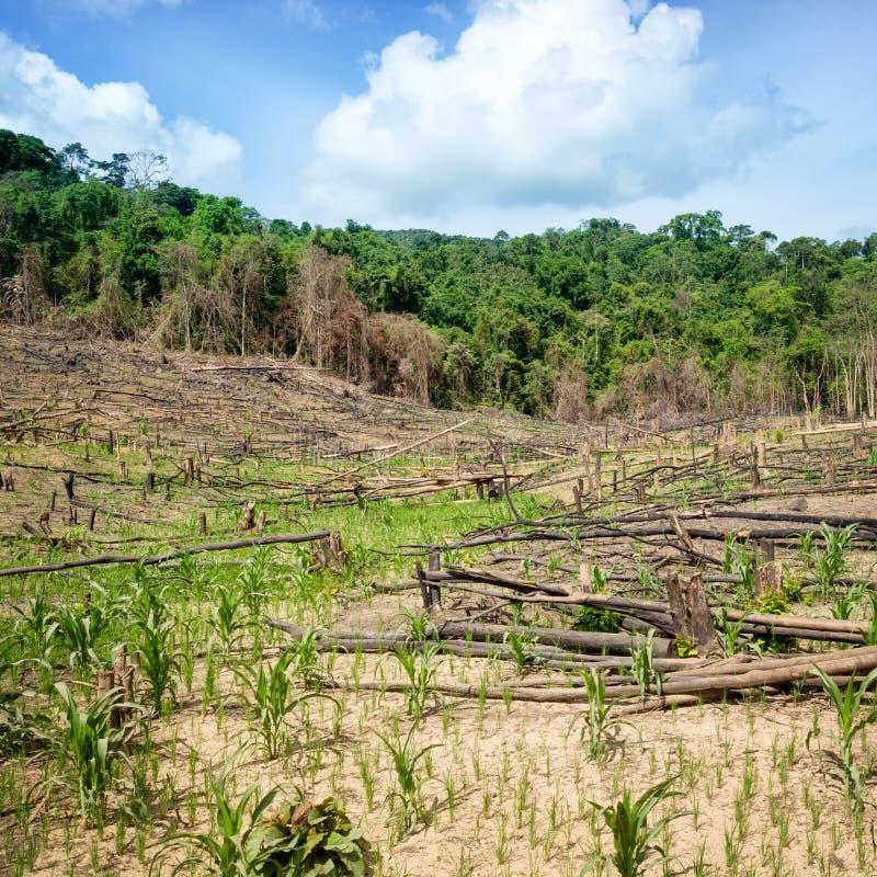 Desflorestamento nas Filipinas fotos de stock royalty free