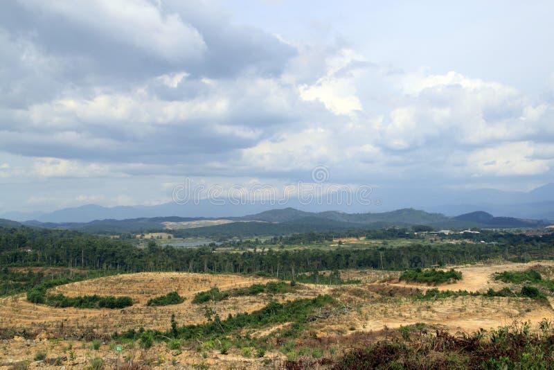Desflorestamento sistemático imagens de stock