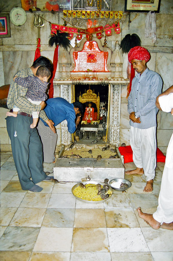 Karni Mata Deshnoke Ratten-Tempel, Bikaner Indien stockbild