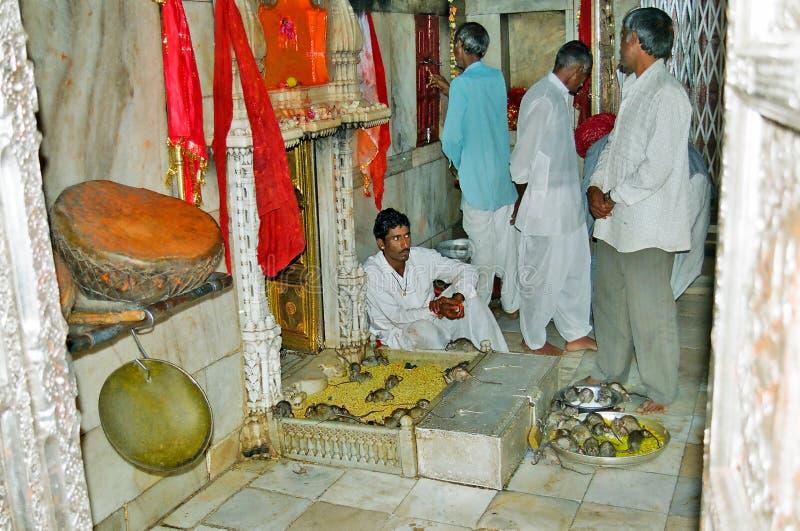 Karni Mata Deshnoke Ratten-Tempel, Bikaner Indien stockbilder
