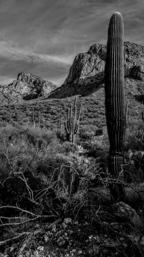 Desierto Blanco Y Negro Escénico Foto de archivo - Imagen de paisaje ...
