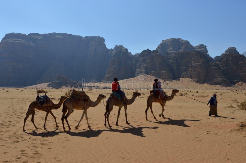 Desierto con los camellos - Jordania de Wadi Rum fotos de archivo libres de regalías