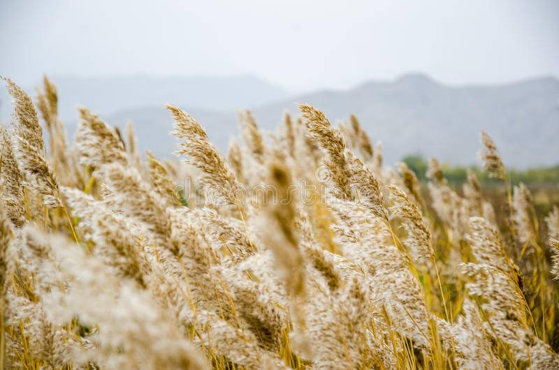 Desierto de Gobi y montañas de Helan imágenes de archivo libres de regalías