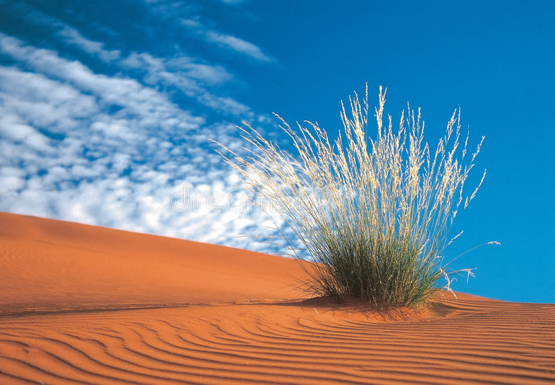 Desierto de Kalahari foto de archivo libre de regalías