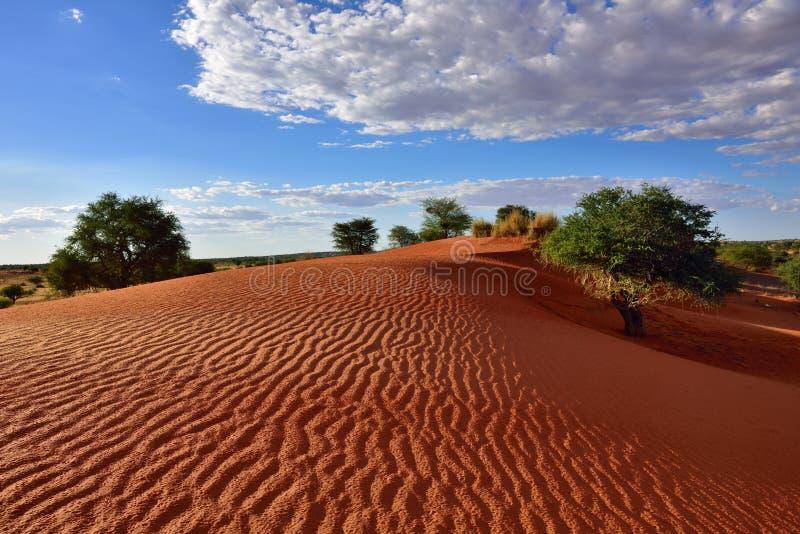 Desierto de Kalahari, Namibia foto de archivo