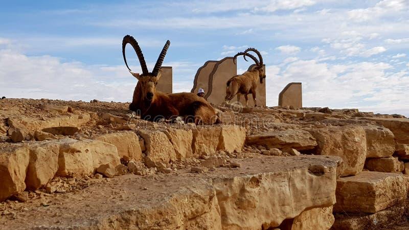 desierto de la naturaleza del paisaje de la tierra de la foto del aire fresco imagenes de archivo