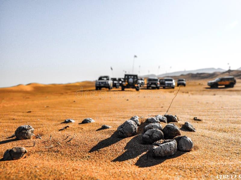 Desierto de los UAE foto de archivo libre de regalías