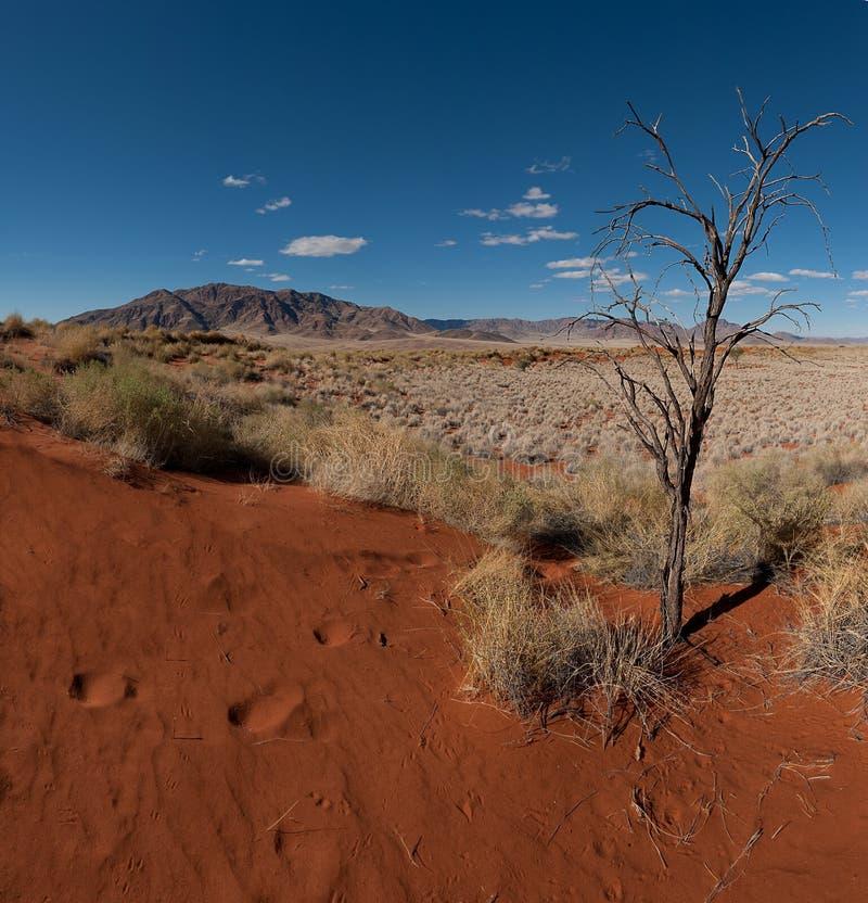 Desierto de Namib (Namibia) imágenes de archivo libres de regalías