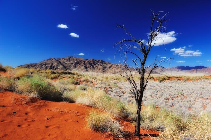 Desierto de Namib (Namibia) foto de archivo libre de regalías
