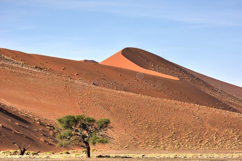 Desierto de Namib, Namibia imagen de archivo