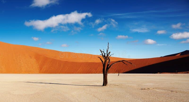 Desierto de Namib, Sossusvlei, Namibia imágenes de archivo libres de regalías