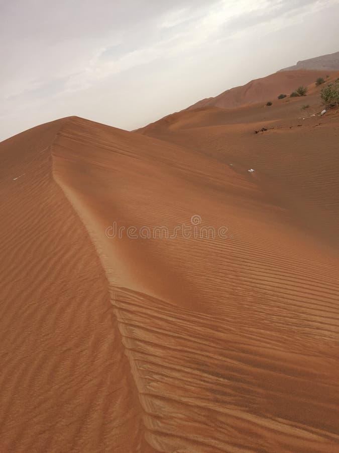 Desierto de oro foto de archivo libre de regalías