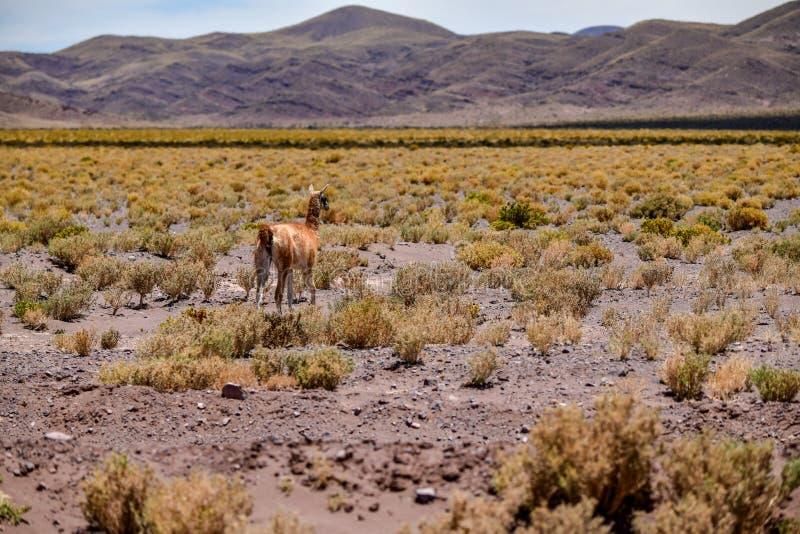Desierto de San Pedro de Atacama en Chile imagen de archivo libre de regalías