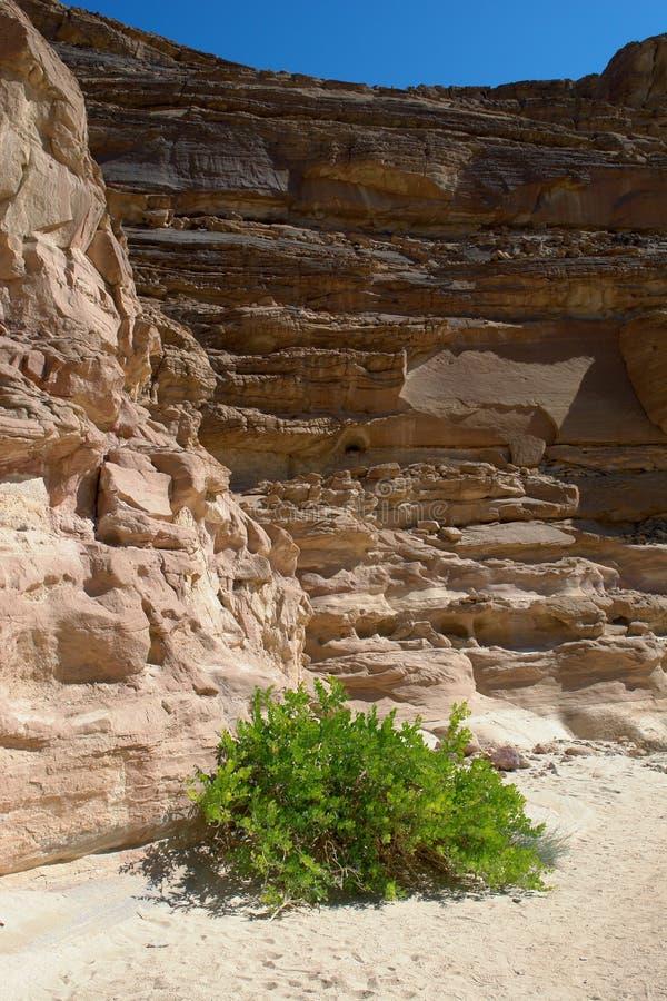 Desierto de Sinaí, barranca coloreada imagenes de archivo