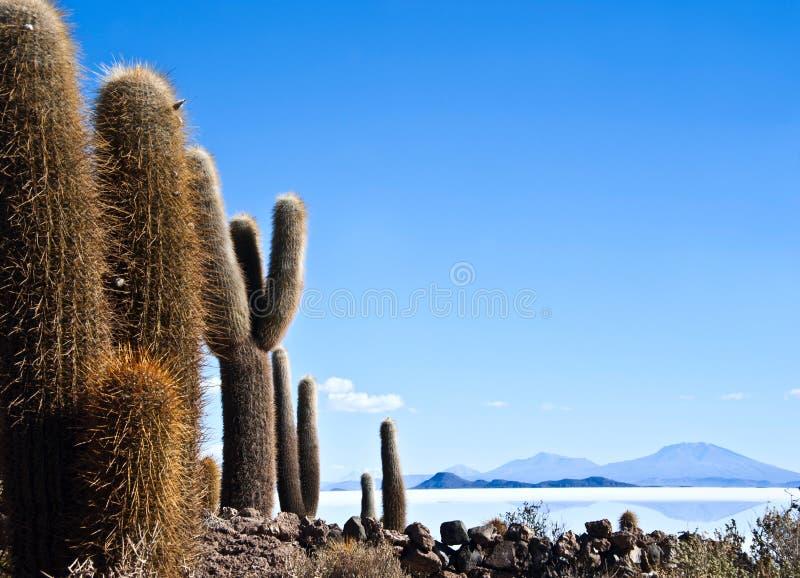 Desierto de Uyuni en Bolivia fotografía de archivo libre de regalías