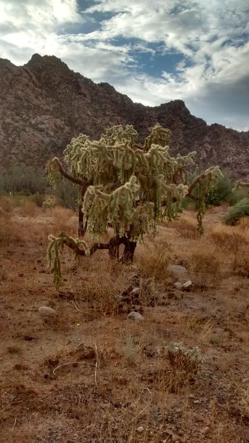 Desierto del cactus imagenes de archivo
