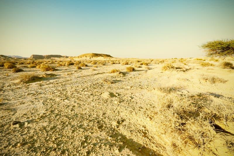 Desierto del estilo del vintage foto de archivo