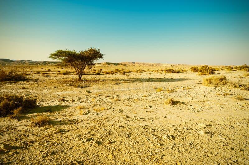 Desierto del estilo del vintage fotografía de archivo libre de regalías