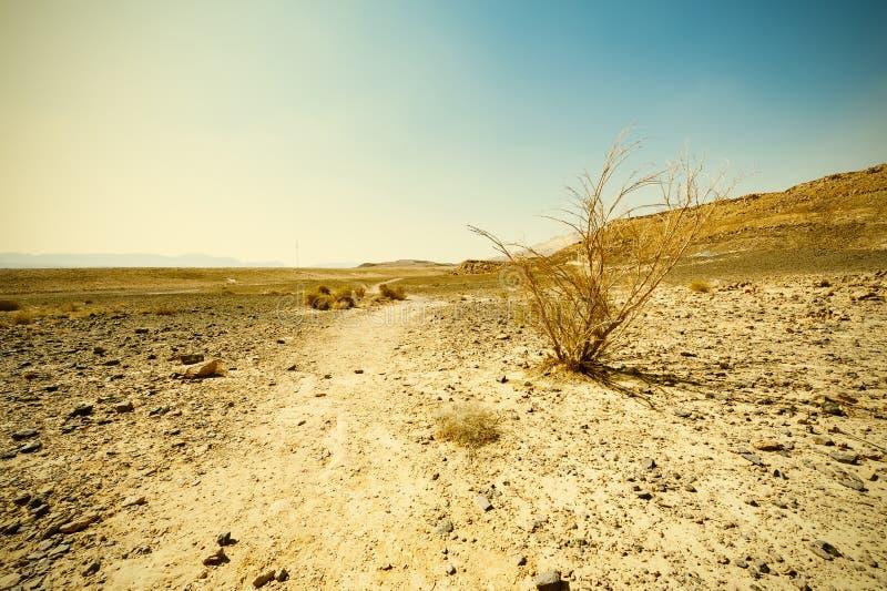 Desierto del estilo del vintage imagenes de archivo