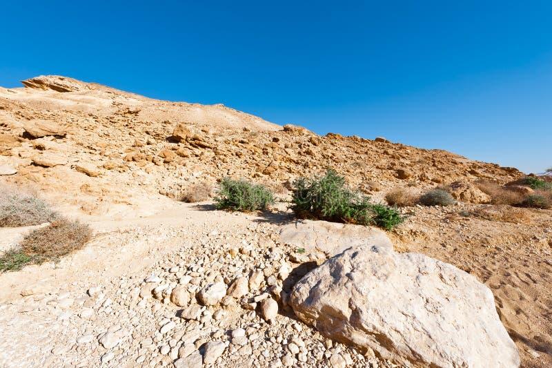 Desierto del Néguev foto de archivo